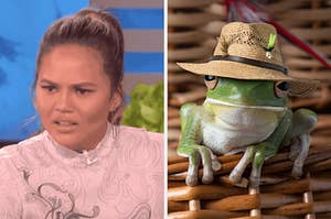 On the left, Chrissy Teigen furrowing her brows in confusion, and on the right, a frog wearing a hat