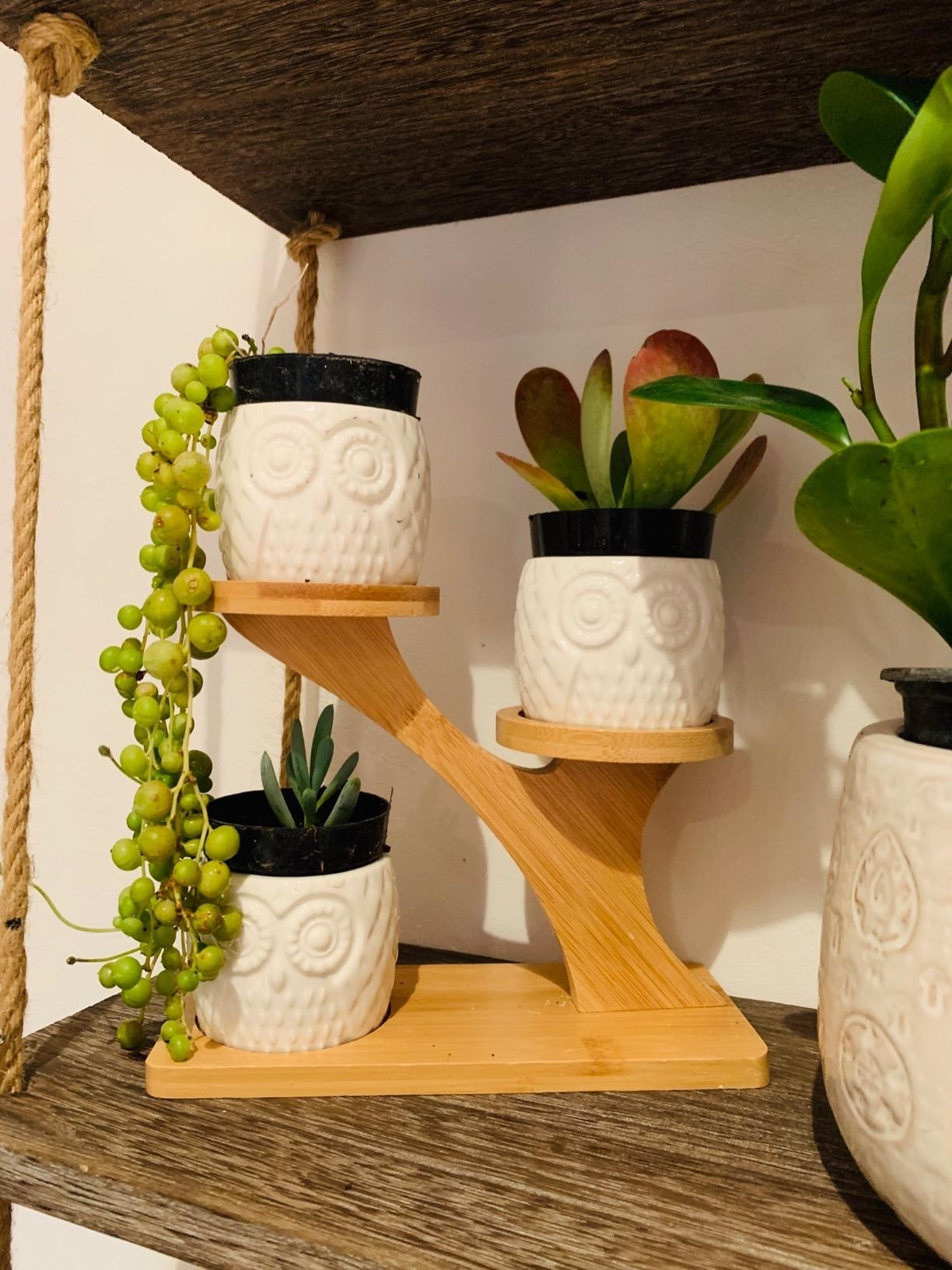 Reviewer photo of owl succulent pots on three-tiered stand