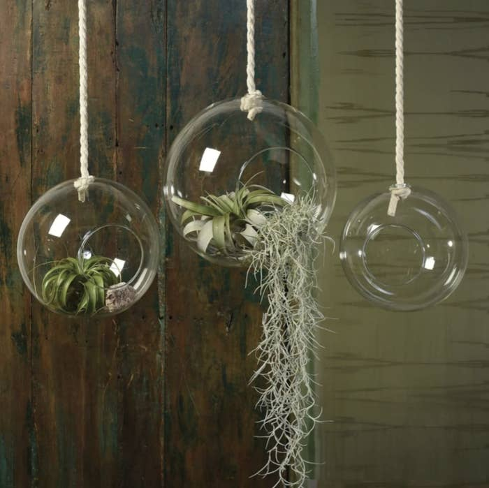 three hanging glass bubbles attached to rope with air plants in them