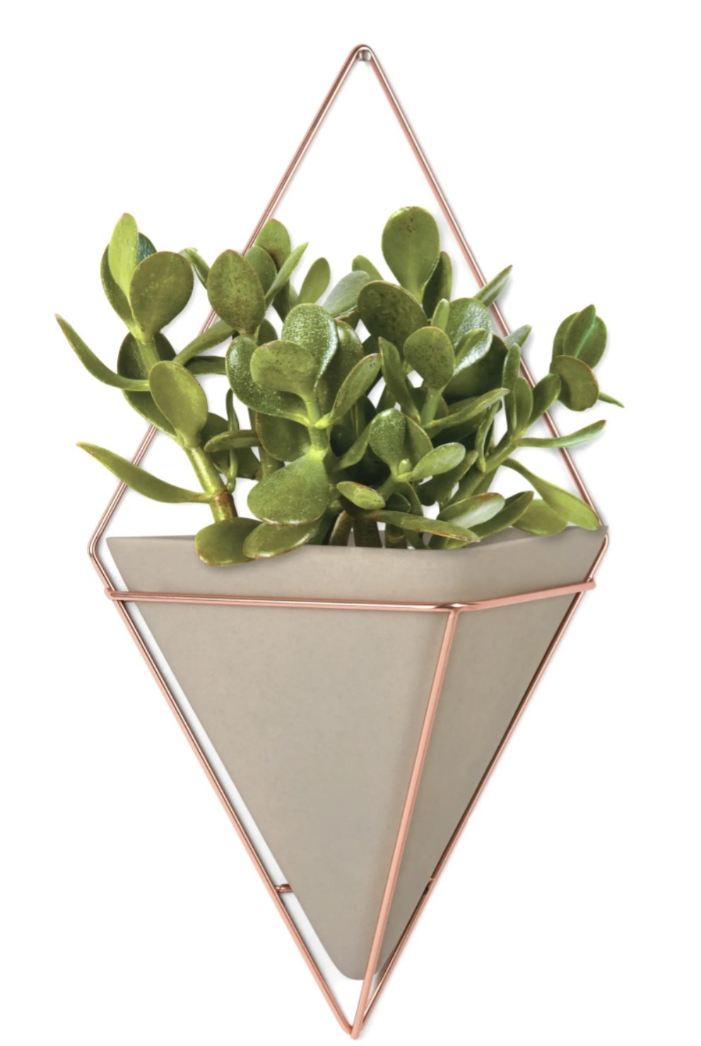 a concrete and brass wall vessel holding a succulent