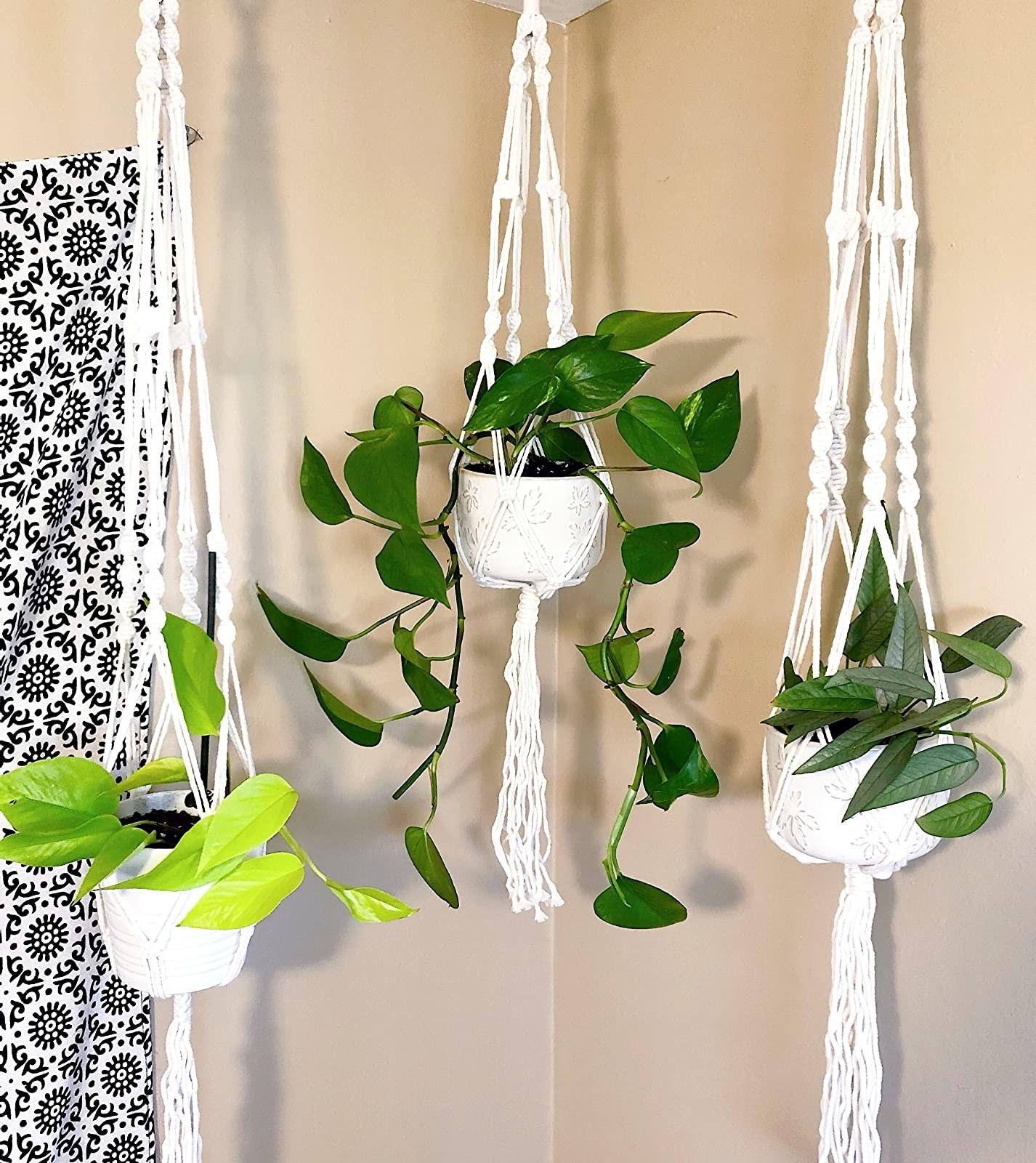 three plants hanging from the white macrame hangers