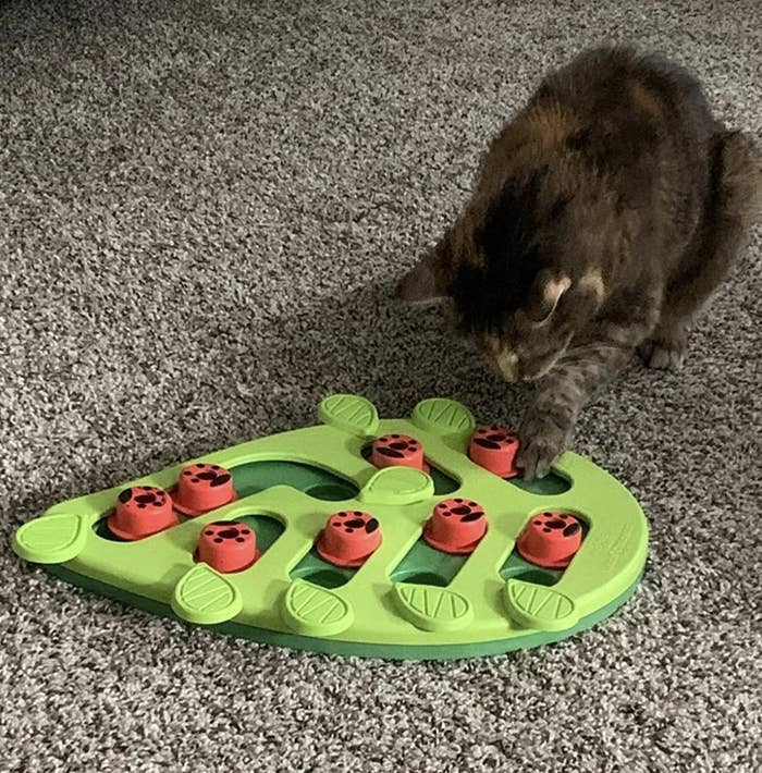 a cat uncovering a treat from the puzzle board