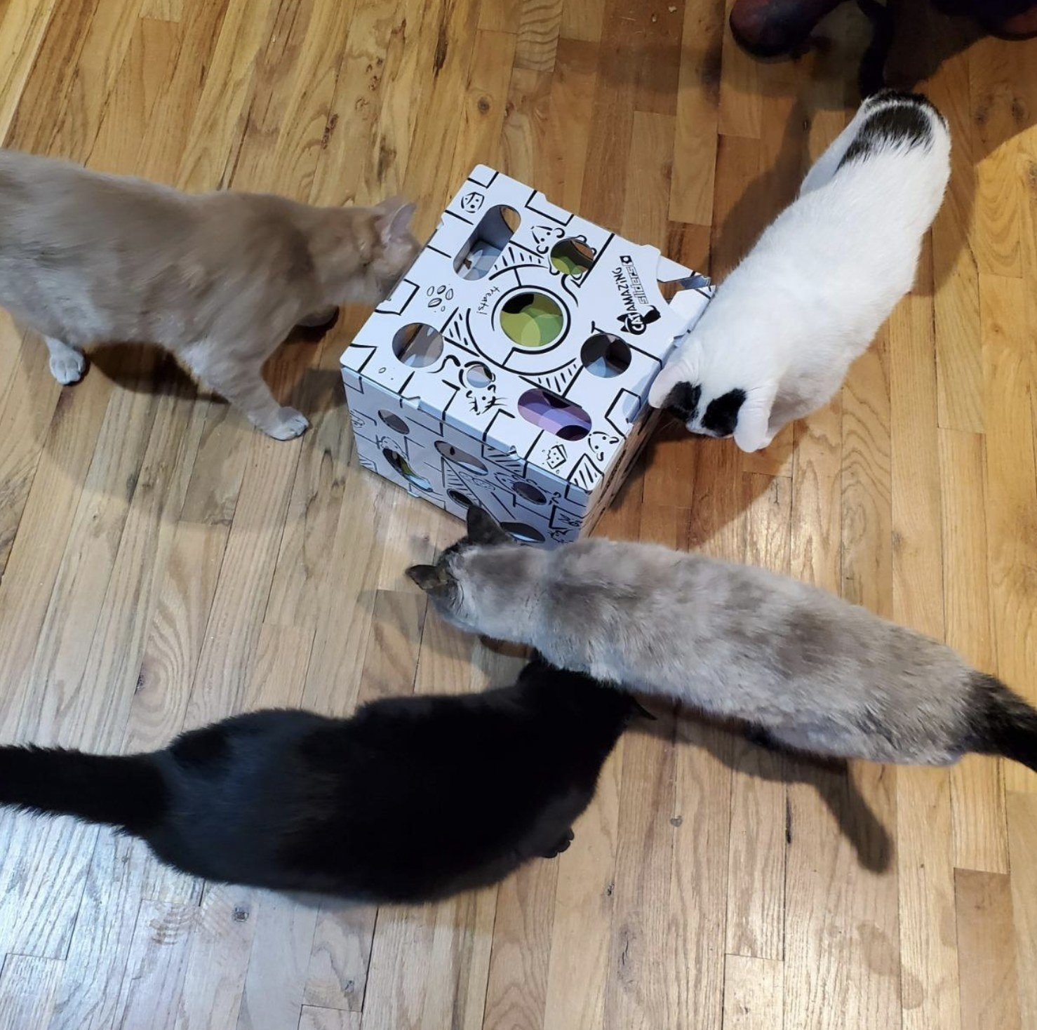 four cats playing with the interactive treat puzzle