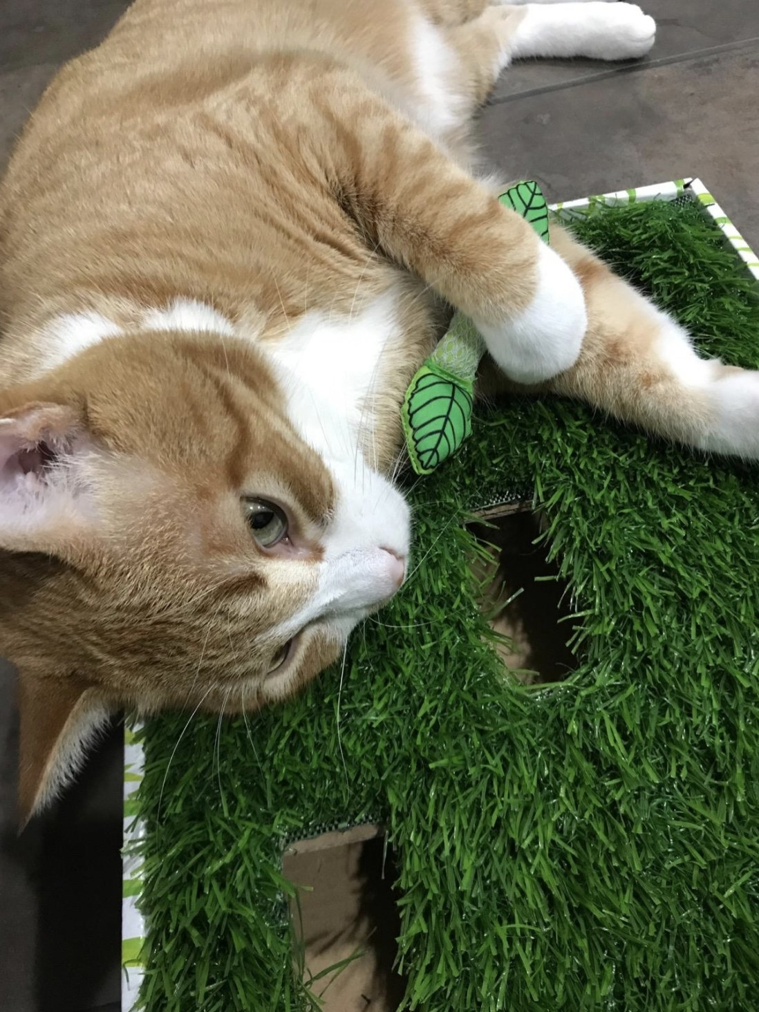 a cat laying on the grass scratcher