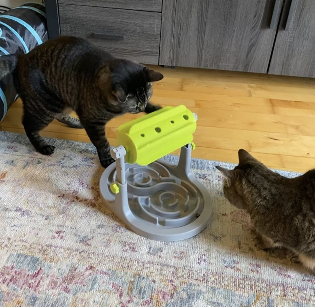 two cats playing with the food puzzle toy
