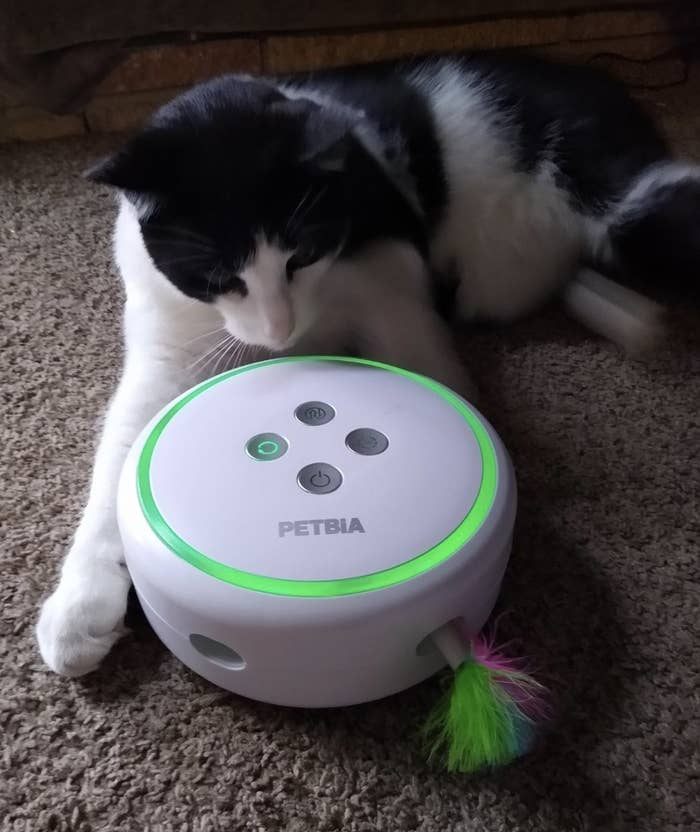 a cat starting at a white cat toy that has a feather sticking out of its side