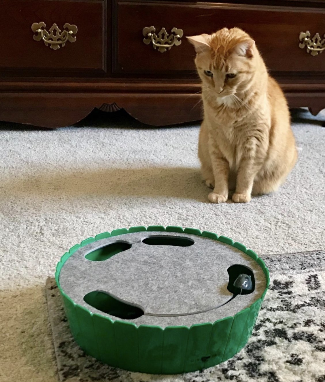 a cat starting at a green cat toy that has a running toy mouse in it