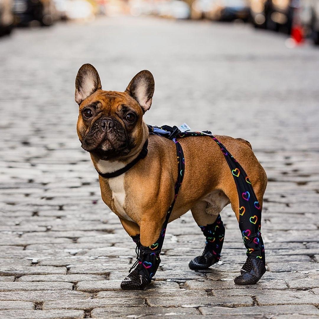 a dog wearing the waterproof pet leggings