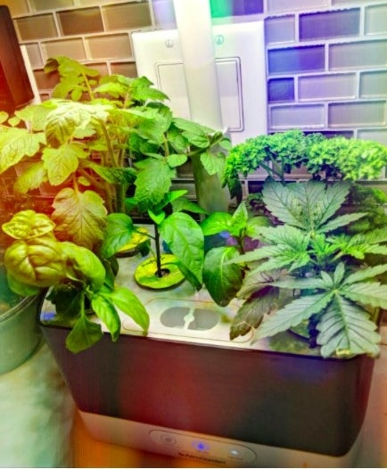 The Areogarden sits on a user's countertop with different types of herbs and vegetables growing in each of its six pod compartments