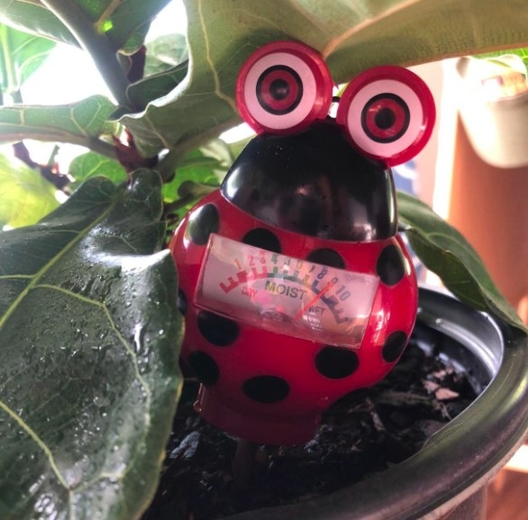 The ladybug-shaped meter stuck in a potted plant with a moisure meter on its tummy
