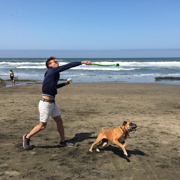 dog and man on beach with ball launcher