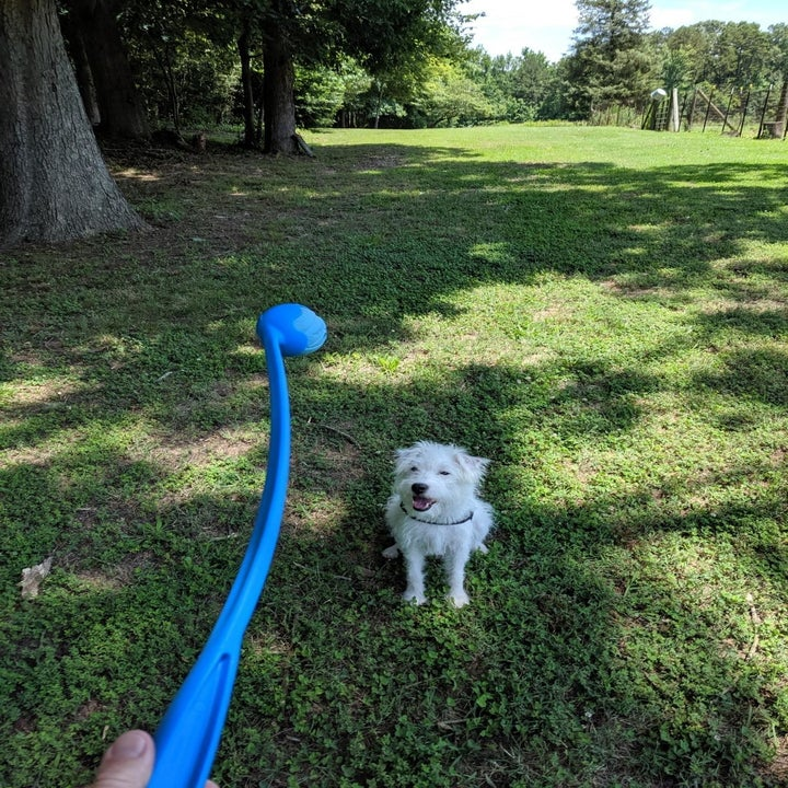 dog in yard with launcher in hand