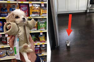 A tiny dog wearing a jacket and being held in one hand, and a kitten that's so small you can barely see it in a photo of a kitchen