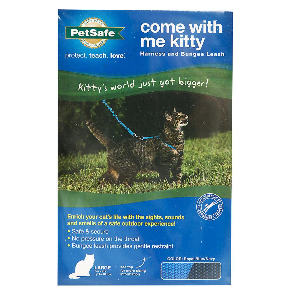The cat leash/harness set