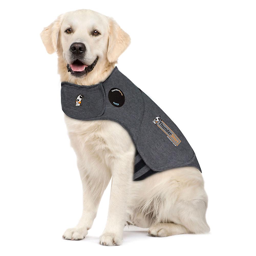 A medium-sized white dog wears the shirt