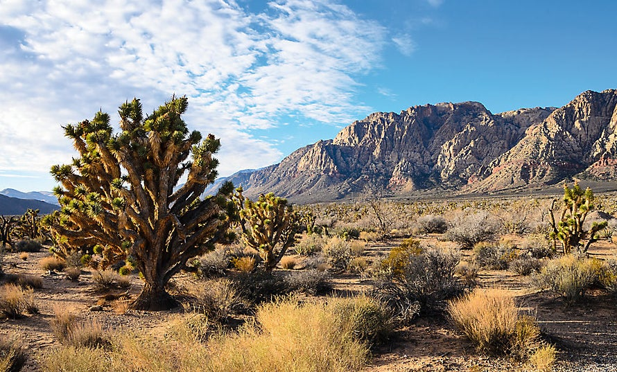 The image on the cling, showing desert scenery
