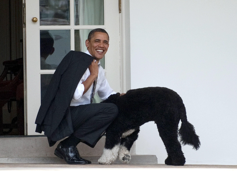 President Obama smiling as he kneels down to greet Bo