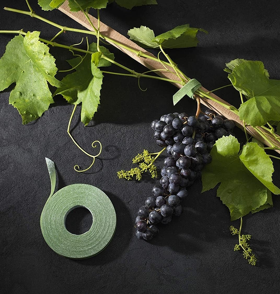 A roll of garden tape on a sprig of grapes