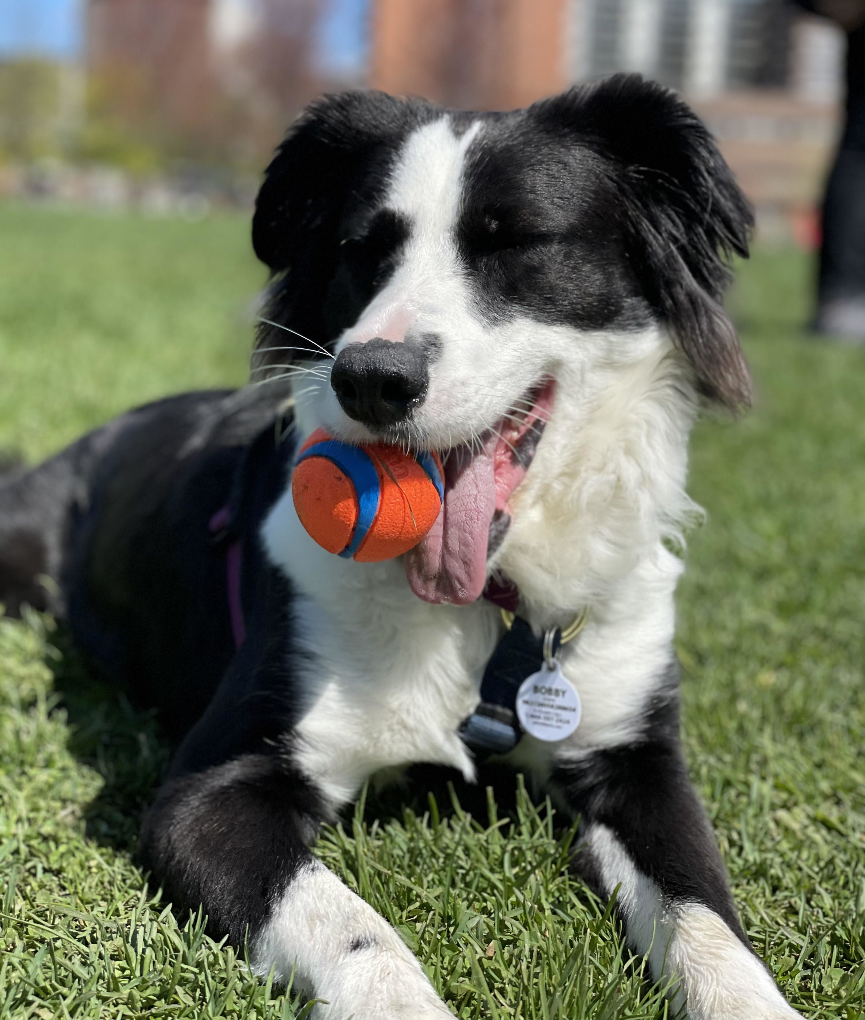 A dog with a ball in its mouth