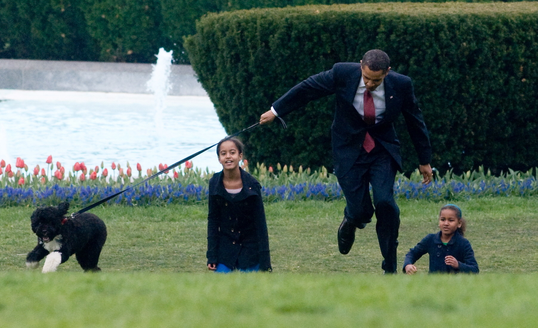 Bo pulling on his leash as President Obama tries to hold on