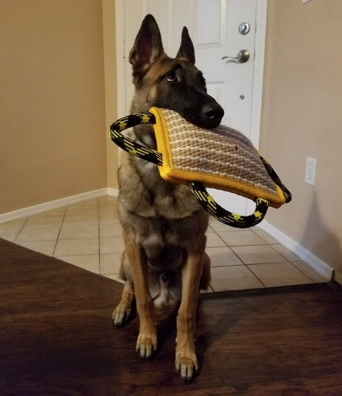 """A reviewers dog biting on a 10"""" x 7"""" durable dog pillow"""