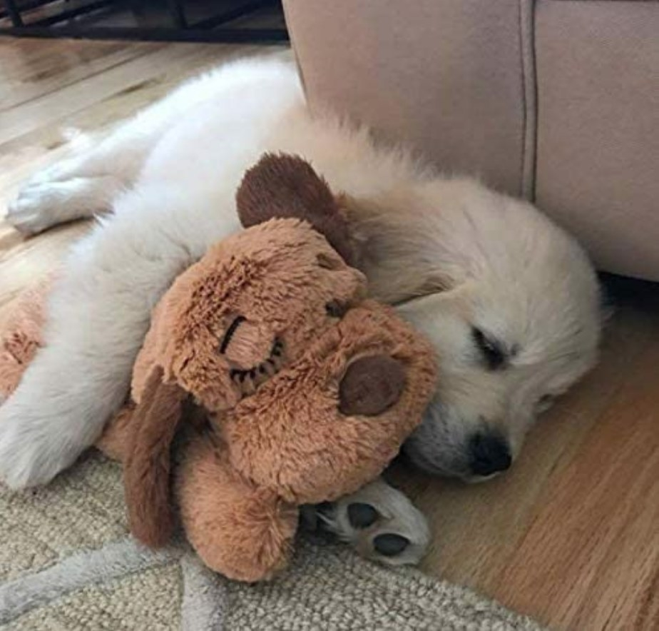 """A cute puppy snuggling the plush dog toy with a """"real feel"""" pulsing heartbeat and heat pack that provides relief for anxiety"""