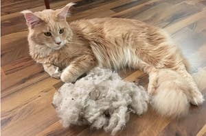 A long-haired cat next to a large clump of hair removed from the carpet with broom