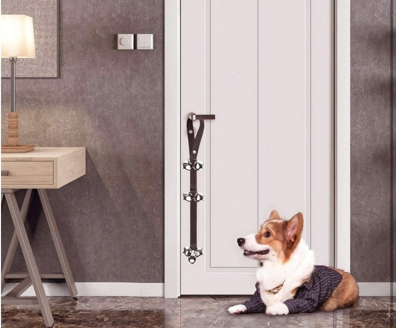 A reviewers dog looking at the adjustable doorbell used for potty training