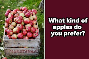 """A bucket of apples are on the left with a label on the right that reads: """"What kind of apples do  you prefer?"""""""
