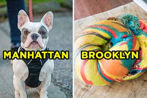 """On the left, a French bulldog on a leash labeled """"Manhattan,"""" and on the right, a rainbow bagel labeled """"Brooklyn"""""""