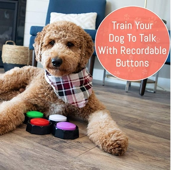 A dog lying behind the four recordable training buttons