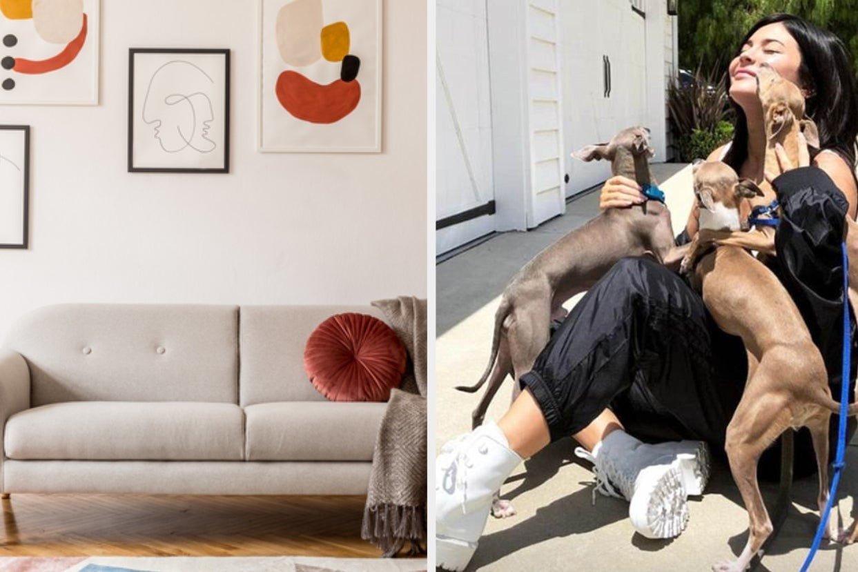 Modern living room and Kylie with puppies