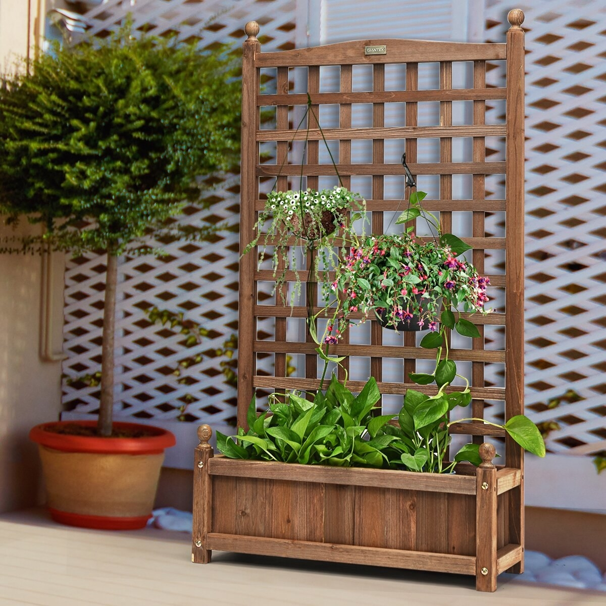 the wooden trellis with two hanging plants and some greenery in the base