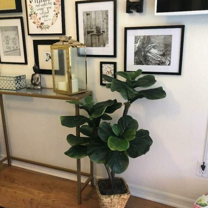 the faux plant in a reviewer's home