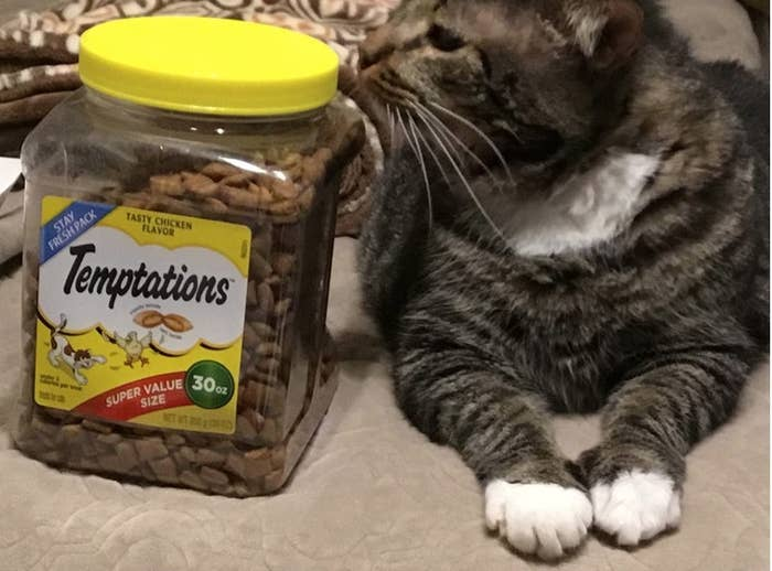 A reviewers cat next to a box of Temptations treats