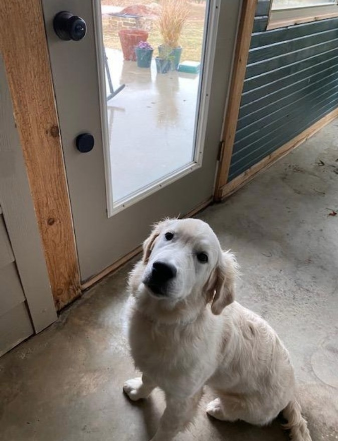 A reviewers dog standing near the dog doorbell attached to the door