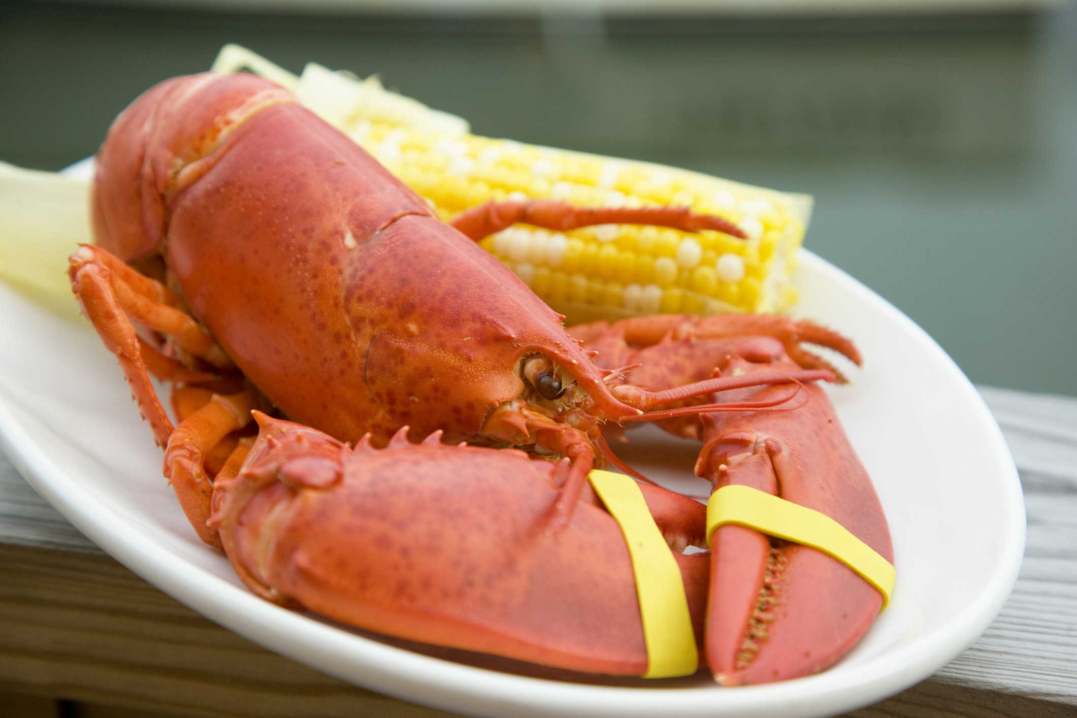 A whole steamed lobster with corn on the cob.