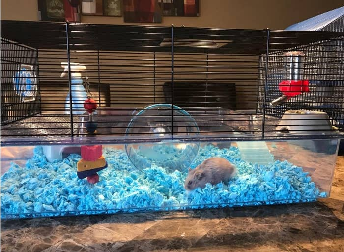 A hamster walking through the Favola cage
