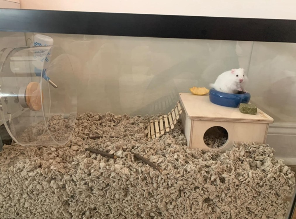 A hamster sitting on top of the wooden hut in its cage