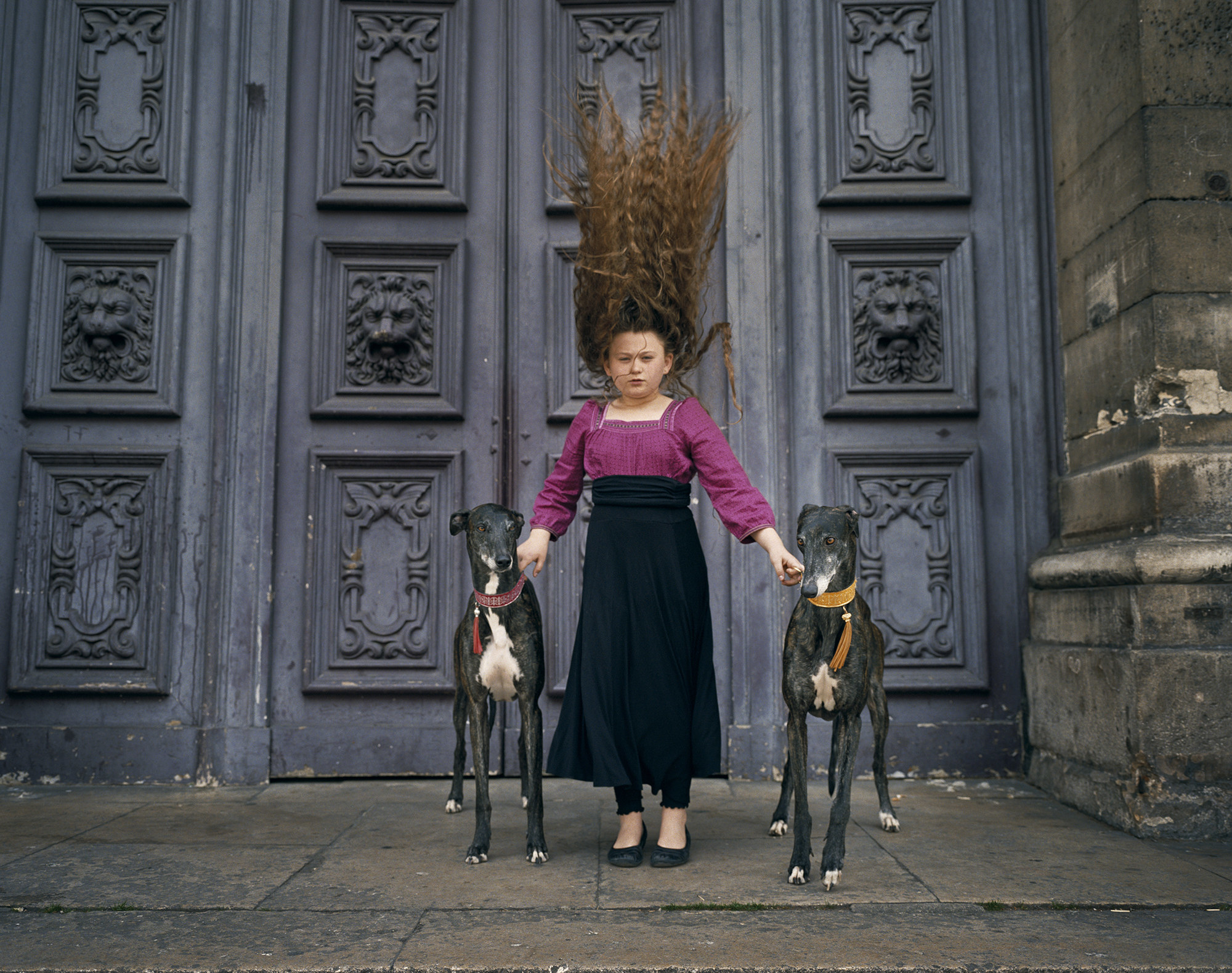 Two greyhounds stand on either side of a young girl, whose hair stands straight up as if she just jumped