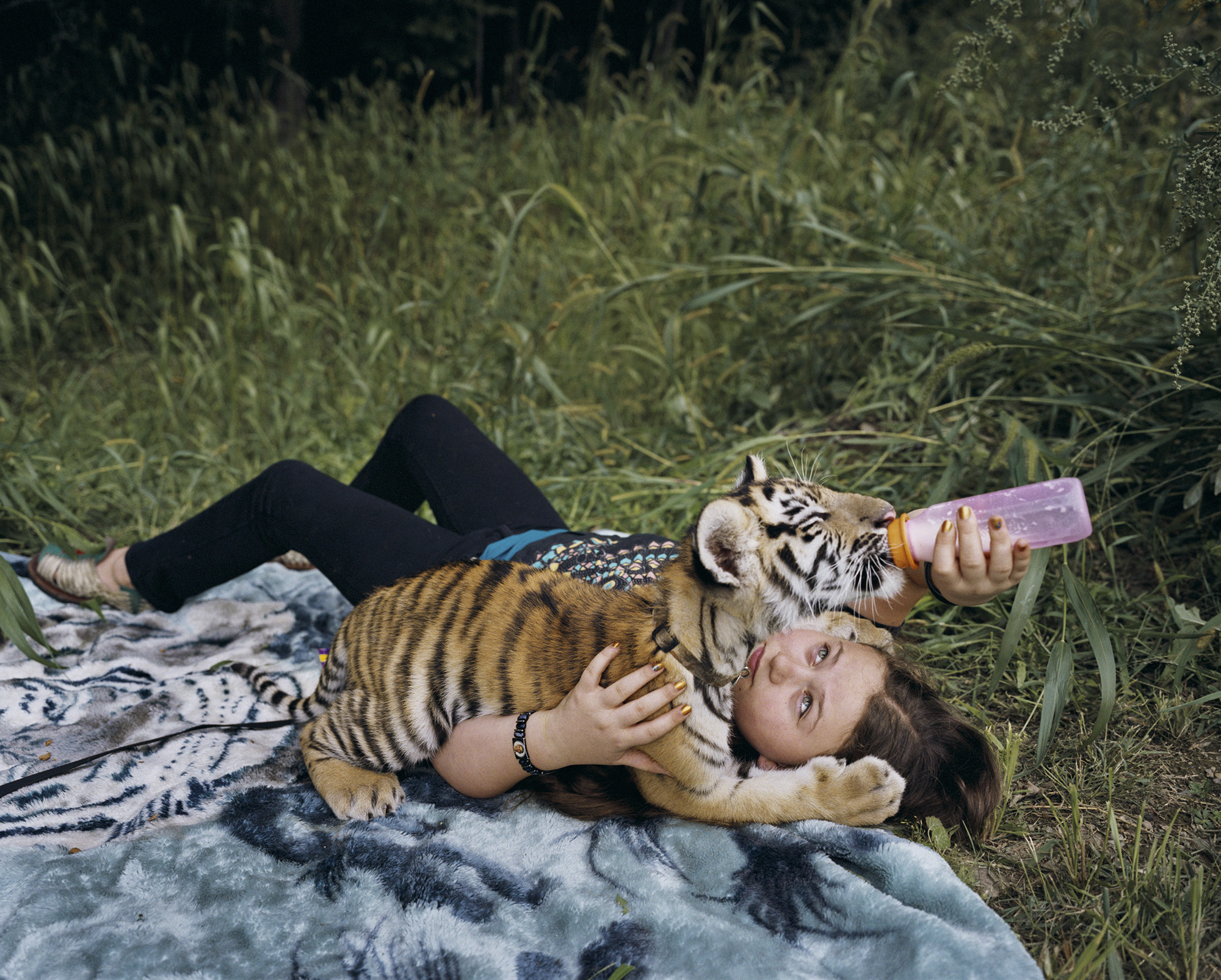 Amelia and a baby tiger lie on a blanket as she gives the animal a drink from a baby bottle