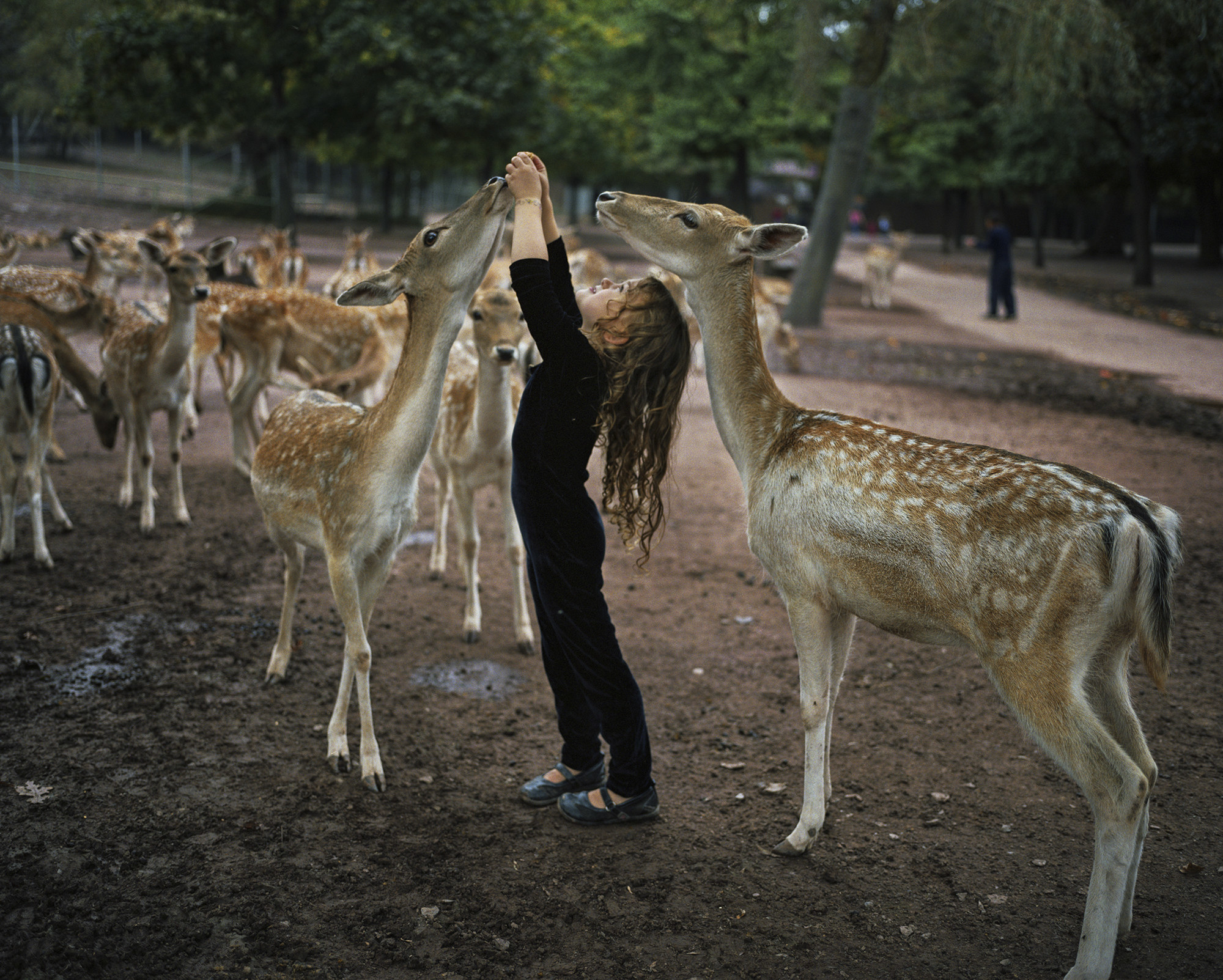 A young girl feeds a group of deer