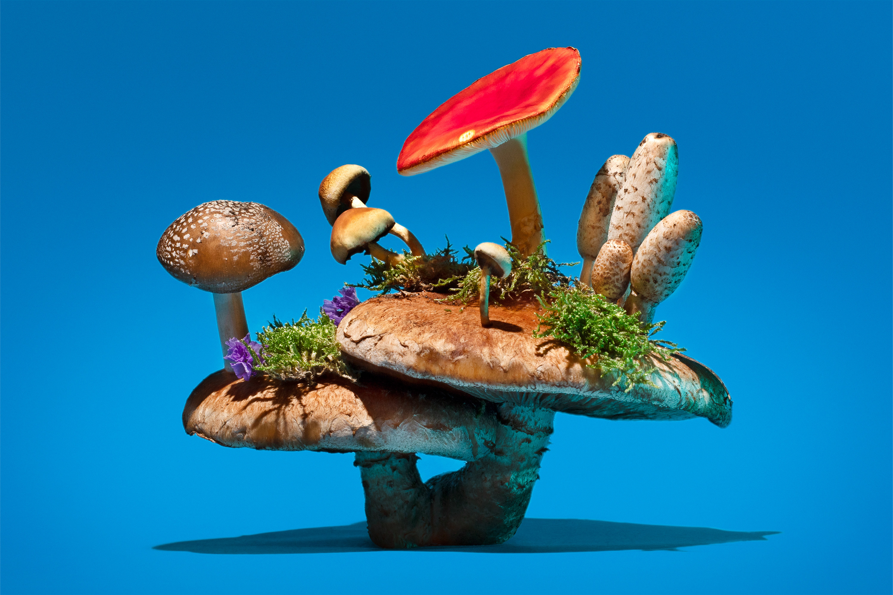 A pile of mushrooms stacked on top of one another