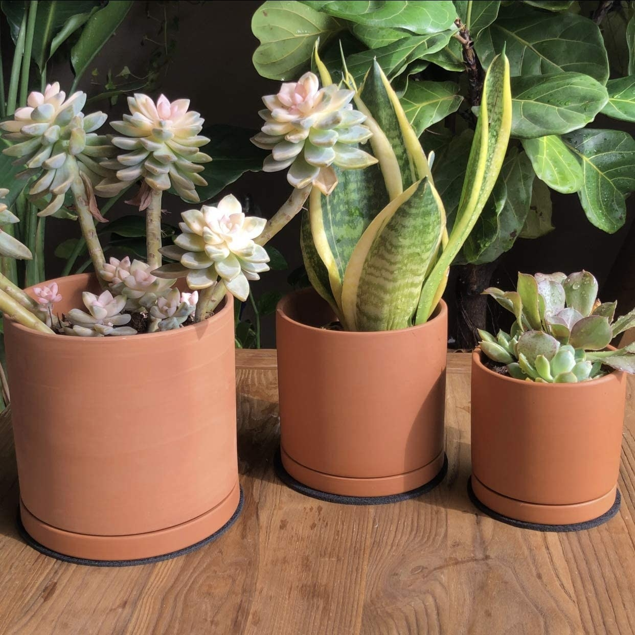 cylinder shaped planters