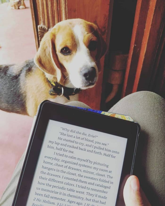A person holding the Kindle. There's a beagle in the background.
