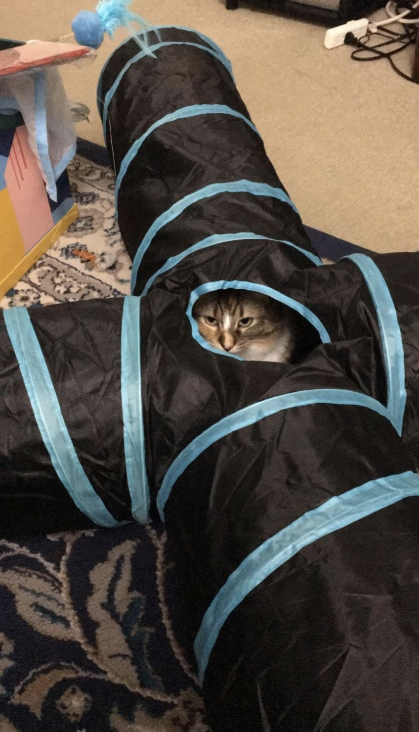 A cat poking their head out of a cat tunnel