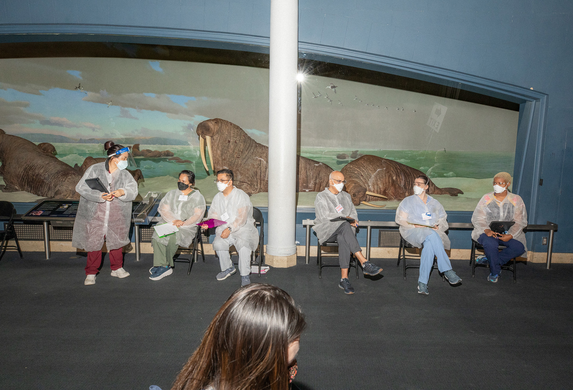 Nurses wearing face masks and face shields chat in front of models of walruses at a museum