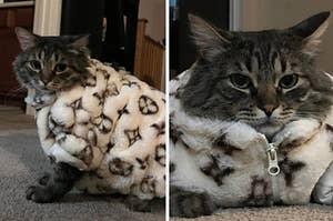 A cat wearing a fur coat