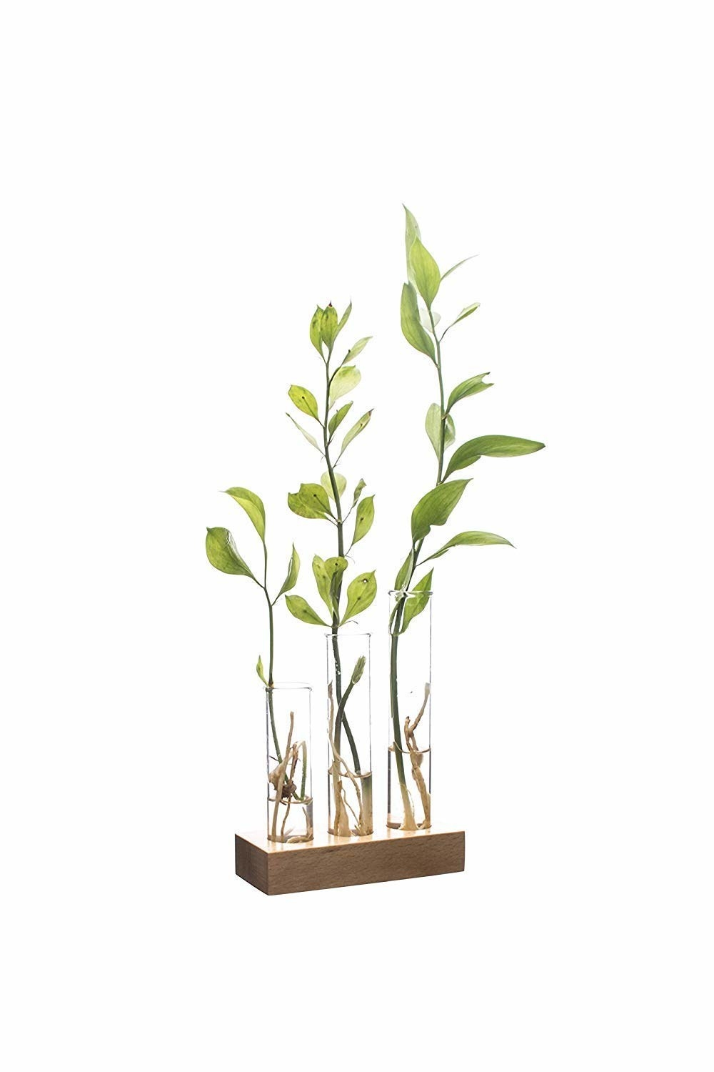 Three small test tube planters with a wooden base