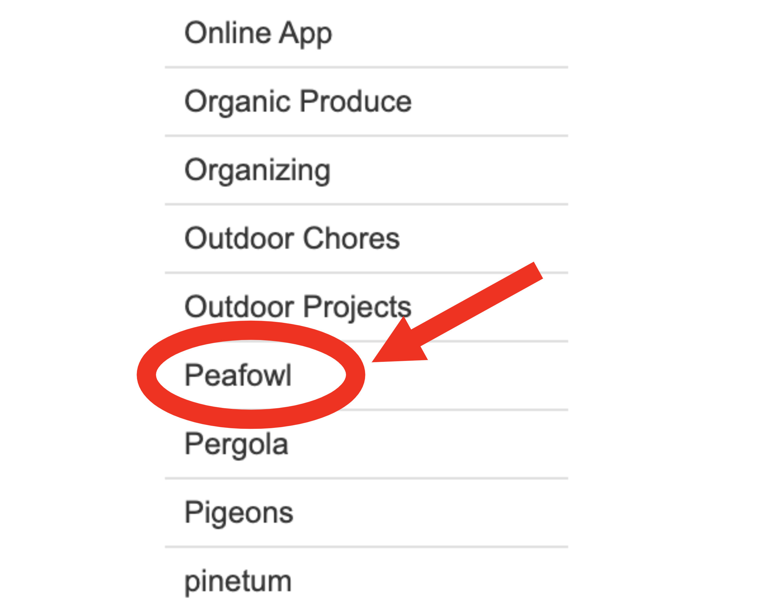 The category 'peafowl' is circled on her blog